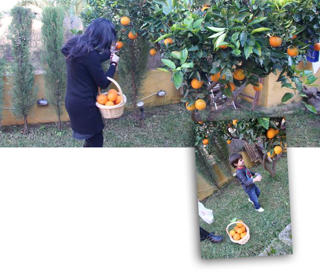 orangebysorange